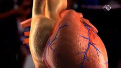 EenVandaag in de klas: Organen kweken met stamcellen