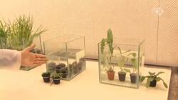 EenVandaag in de klas: Waterbestendige gewassen