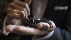 Hoe worden wormen gekweekt?: Van eitje tot visvoer