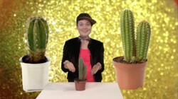 Hoe overleven cactussen in de woestijn?: Ze slaan regenwater op