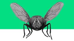 Waarom zijn insecten nuttig?: Opruimers en voedselbronnen