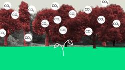 Hoe groen is biomassa?: Energie uit verbranding van hout en GFT-afval