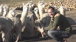 Het Klokhuis: Alpaca's
