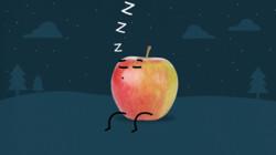 Hoe worden geoogste appels bewaard?: Langer vers door minder zuurstof
