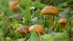 Vroege Vogels in de klas : Wasplaten en andere paddenstoelen in de duinen