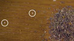 Wat zijn de korreltjes in je thee?: Smaakmakers voor goedkope thee