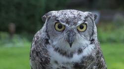 Waarom is een uil een nachtdier?: Uitstekende oren en geruisloze vleugels