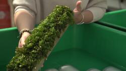 Hoe wordt zeewier gekweekt?: Het voedsel van de toekomst