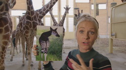Het Klokhuis: Okapi