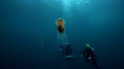 Duiken op de Doggersbank: Het duikverhaal van Peter
