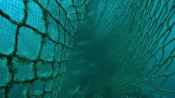 Wat zijn spooknetten?: Het duikverhaal van Ben