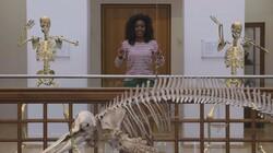 Het Klokhuis: Skelet