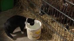 De Kennis van Nu in de klas : Hoe tam is de huiskat?
