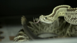 De reptielenopvang: Opvang voor gesmokkelde en afgedankte slangen en krokodillen