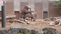 Seksuele diversiteit in het dierenrijk: Homoseksualiteit en groepsseks bij dieren