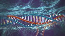 Nieuwsuur in de klas: Menselijk DNA aanpassen