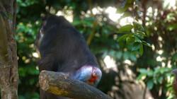 Hoe belangrijk zijn billen voor apen?: Experts in het herkennen van elkaars kont