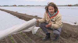 Het Klokhuis: Slateelt op water