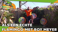Met judoka Roy Meyer: Workout voor thuis: Dag 14