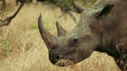 Ersin in Wonderland in de klas: Krugerpark, Zuid-Afrika