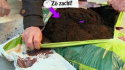 Welke grond zit er in potgrond?: Jouw kamerplant is minder groen dan je denkt