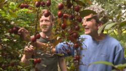 Wat is een voedselbos?: Vrije landbouw middenin de natuur