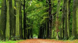 EenVandaag in de klas: Meer bomen in Nederland