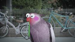 Kunnen vogels verkouden worden?: Een snavel met snottebel