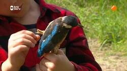 Beestenbrigade: Nest voor ijsvogels