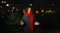 Hier komt jouw kerstboom vandaan: Sparrenboom van zo'n 7 jaar oud met wortels in Georgië