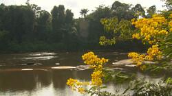 De wereld rond: Suriname