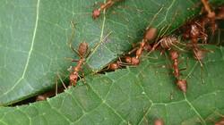 De Kennis van Nu in de klas: De mierenboerderij