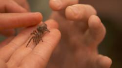 Baby vogelspin: Op kraambezoek