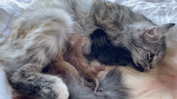 Geboorte van kittens: De poes van Rachel krijgt kittens