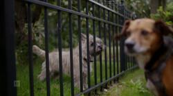 EenVandaag in de klas : Honden uitlaten