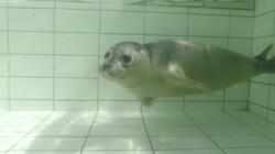 Jonge zeehond: Op kraambezoek