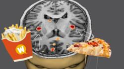 Waarom vinden we patat, pannenkoeken en pizza zo lekker?: Onze hersenen houden van vet