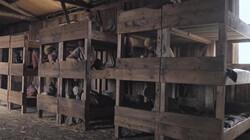 Anne Frank in concentratiekamp Bergen-Belsen: De laatste dagen van Anne en Margot