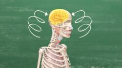 Hoe weet een pilletje waar de pijn zit?: Zenuwen sturen pijn naar je hersenen