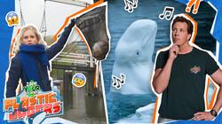Zapp Your Planet: Plasticjagers: Freek is op zoek naar Beloega's en Janouk vist plastic uit de gracht!