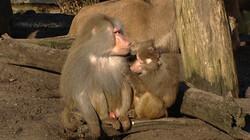 Gedrag bestuderen: Wat beïnvloedt het gedrag van dieren?