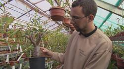 Planten in extreme omstandigheden : Aanpassen om te overleven