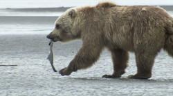 Zoolgangers, teengangers en topgangers: Hoe zijn poten van dieren aangepast aan hun omgeving?