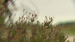 Heidelandschap: Een typisch landschap in hoog Nederland is de heide