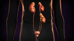 Nierziekte: De nieren filteren afvalstoffen uit het bloed