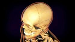 Gewrichten: Hoe zitten botten aan elkaar vast?