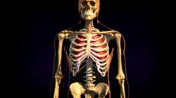 Geraamte: Je geraamte bestaat uit botten
