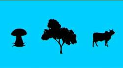 De voedselketen: Van plant naar dier naar mens