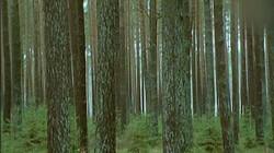 Bosbouw in Zweden: Rechte planken om meubels van te maken