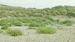 Ontstaan van duinen: Zee, wind en planten